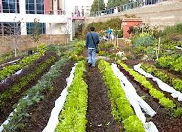 san diego u0027s urban farmers u2014 city farmer news