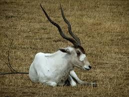 shukernature the day i saw a unicorn on safari