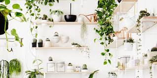 biggest house plants how to decorate with indoor plants