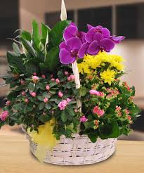 garden basket with an orchid plant same day delivery danvers ma