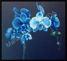 blue orchids marian jackson mda product details