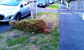 christmas tree collection removal disposal pickup