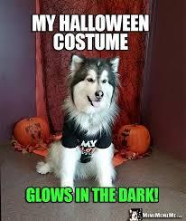 Halloween Costumes Husky Dog Dogs Halloween Jokes Creepy Canine Comedy Happy Halloween