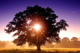 what is a ray of light what is a ray of light made from scotch