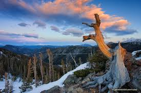 an tree stands to the tundra at rocky mountain national