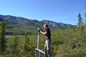 where trees meet tundra decoding signals of climate change