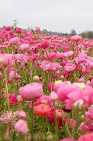 A Garden Of Flowers by 46 Best Flower Field Images On Pinterest Field Of Flowers