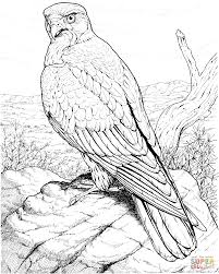 hawk raptor coloring page free printable coloring pages