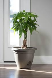 amazon com bloem living lp1060 lucca self watering planter 10