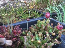 missouri native plant society native plants the epa blog