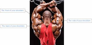 Front Of The Shoulder - how to build big broad shoulder muscles that stand out
