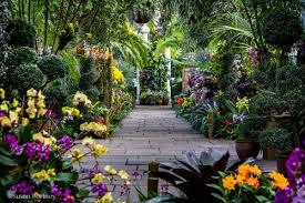 chicago botanic garden orchid show chicago botanic garden show