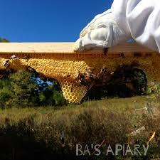 ktbh archives backyard beekeeping