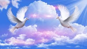 doves peace sky nature background wallpapers on desktop