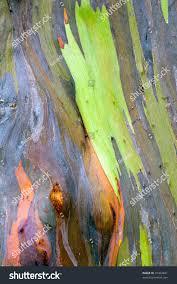 colorful abstract pattern rainbow eucalyptus tree stock photo