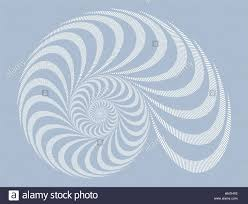 a snail shell spiral pattern in soft gray shades stock vector art
