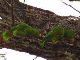 Canopy Birds by Zip Line Canopy Tours In Costa Rica