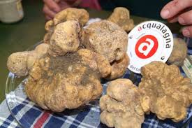 italian white truffle fresh italian white truffle precious t magnatum pico white