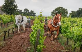 your next lesson value bordeaux bordeaux estate makes wines naturally rosenthal wine merchant
