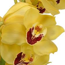 yellow orchid cymbidium orchids overnight