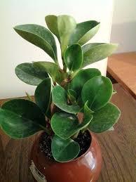 best light for plants indoor plants low light how to grow houseplants in low light