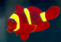 saltwater fish saltwater aquariums and marine aquarium fish