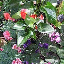 flower power garden centre garden centre