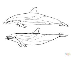coloring pages animals dolphin coloring pages to print dolphins