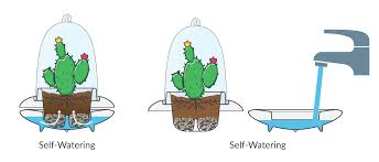 Self Watering How To Care Of Your Plants U2013 Really Easy Kactun Happy Plants