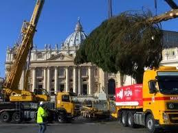 raw vatican christmas tree arrives youtube