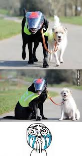 Dogs Helping Blind People 62 Best Guide Dogs For The Blind Are Amazing Images On Pinterest