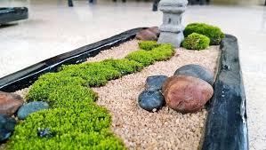mini zen garden with moss and rocks amazing tranquil mini zen