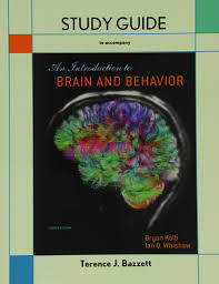 study guide for introduction to brain and behavior bryan kolb
