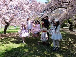 magnificent sakura matsuri at the brooklyn botanic garden blog