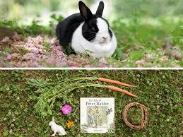 pictures of garden animals hgtv