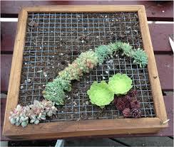 Best Plants For Vertical Garden - framing succs gardening succs