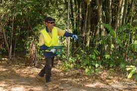 weed out weeds in the rainforest kuranda conservation do you live in an infestation area wet tropics management authority