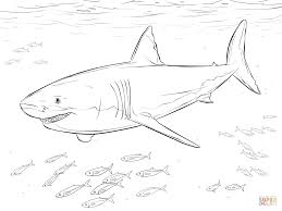 great white shark with pilot fishes coloring page free printable