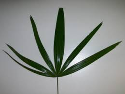 palms for palm sunday purchase palm for palm sunday
