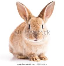 bunny stock images royalty free images u0026 vectors shutterstock