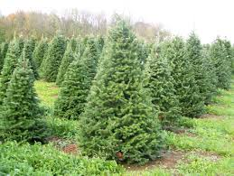 aissen tree farm kewaunee wi trees