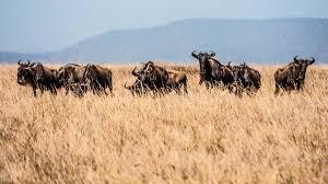 african safari animals wild rainbow african safaris u2013 welcome to wild rainbow african