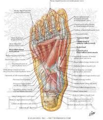 Foot Ligament Anatomy The 25 Best Foot Anatomy Ideas On Pinterest Anatomy Anatomy