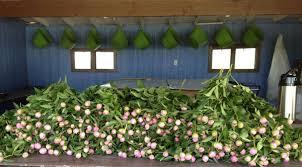 Flowers Salinas - peony acres salinas kansas flirty fleurs the florist blog