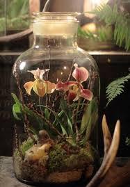 100 best terrariums images on pinterest terrarium ideas