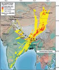 Himalayas On World Map by Goose Migration Across The Himalayas Migratory Routes And