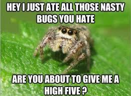 Housekeeping Meme - spiders housekeeping friend or foe london cleaning system
