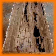 Hardwood Table Tops by Petrified Wood Table Top