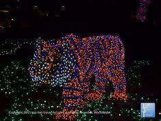 phoenix zoo lights members only zoo map back eps retirement pinterest zoos