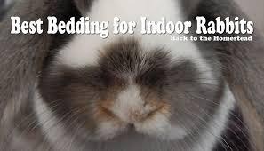 best rabbit bedding for indoor bunnies